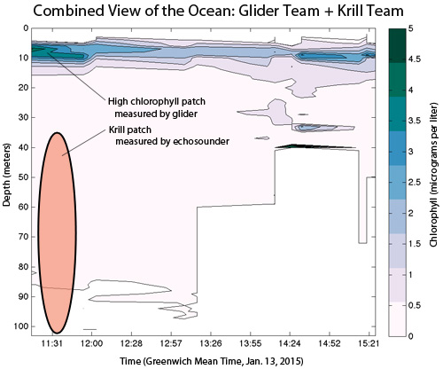 glider transect data with krill results