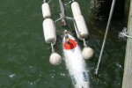 The Fetch AUV and its floating cradle