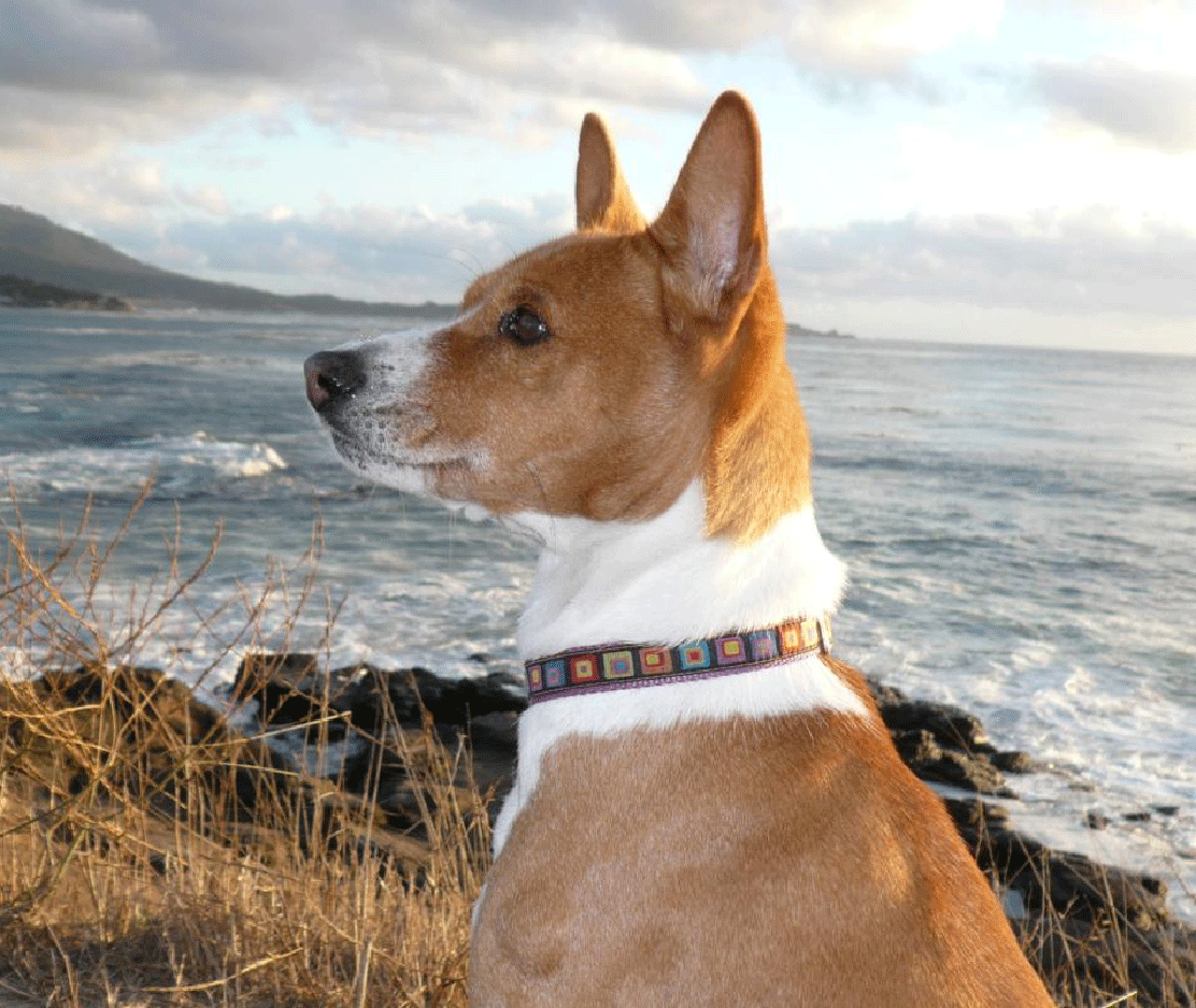 Is it Safe to Walk your Dog on the Beach? | COSEE NOW