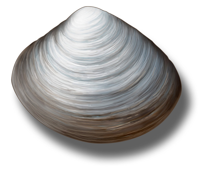 Clams in a jam Ocean Gazing Podcast