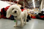 dog at Clothing center