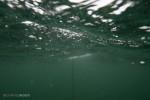 Recap: Modified Circumpolar Deep Water